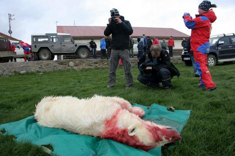 polarbear_shot_wideweb__470x312,0