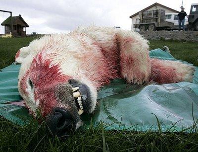dead polarbear